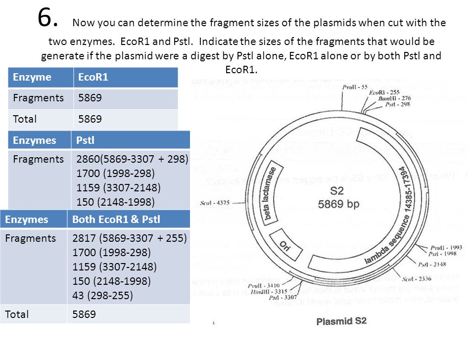 plasmid isolation and restriction enzyme mapping Plasmid 3, 88-91 (1980) short communications a rapid microscale technique for isolation of recombinant plasmid dna suitable for restriction enzyme analysis.