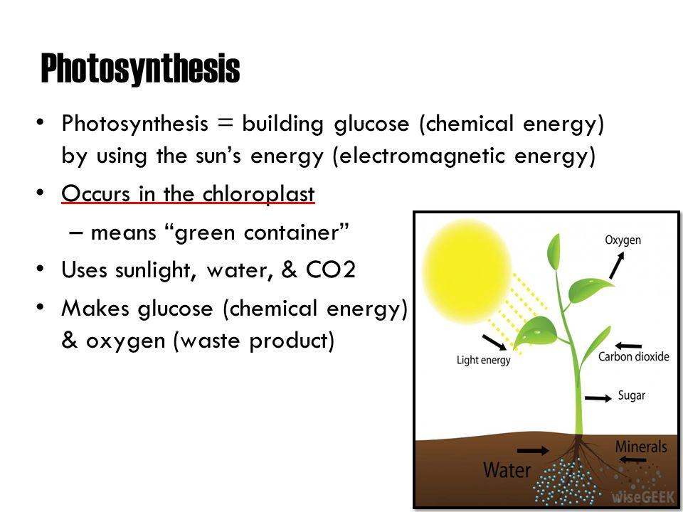 Photosynthesis. - ppt download