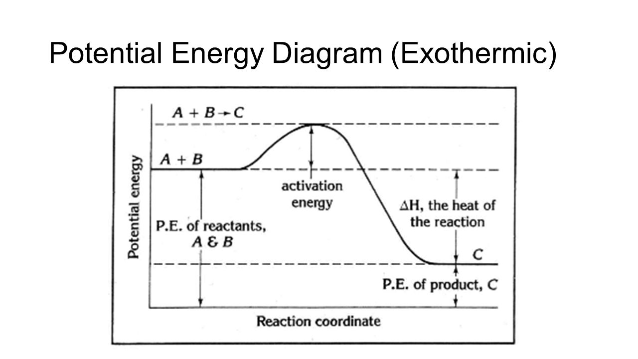 Aim what factors affect rate of reactions ppt download 16 potential energy diagram exothermic pooptronica