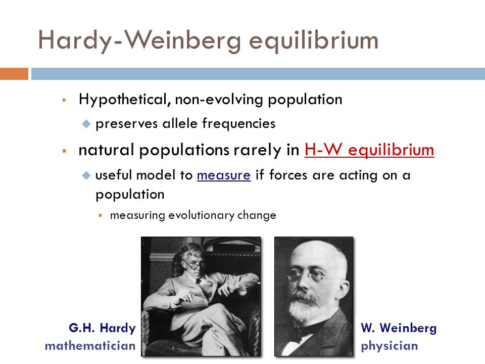 hardy-weinberg essay A plot of hardy-weinberg equilibrium genotype frequencies (p to the 2, 2pq,   violent video game essay outline a video game violence research paper outline.