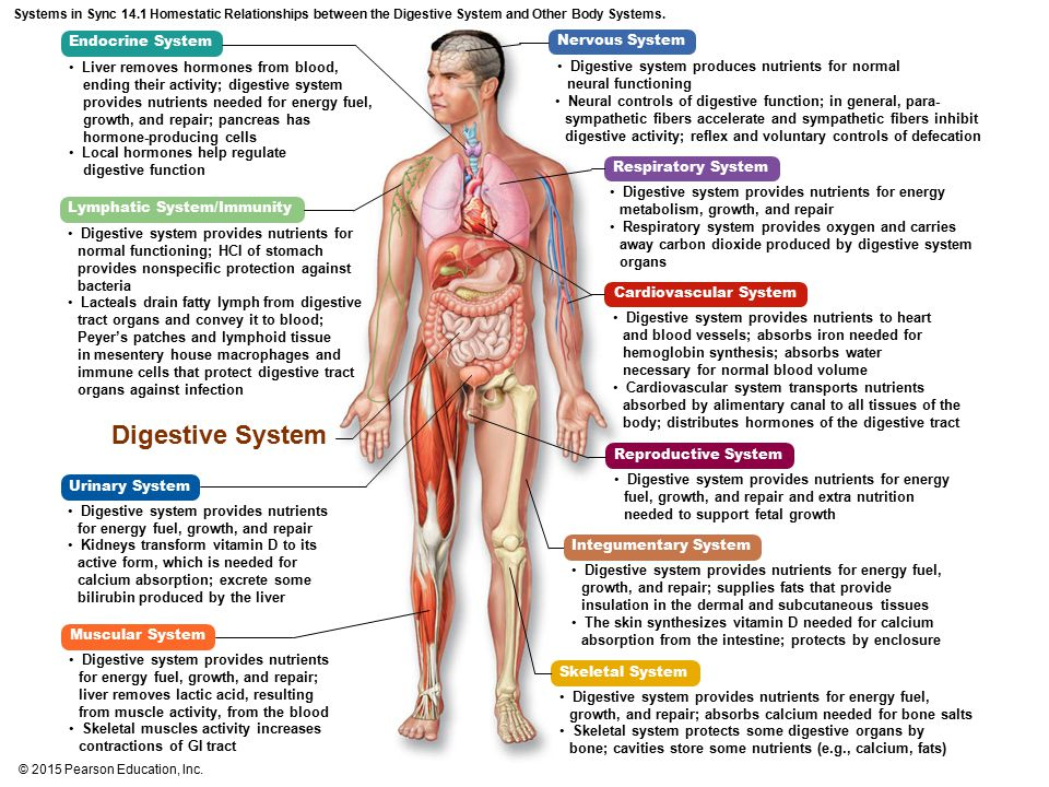 energy metabolism cardiovascular and digestive systems Get an answer for 'evaluate how the cardiovascular and respiratory systems work together to supply the body with oxygen and remove carbon dioxideplease explain how the cardiovascular and respiratory systems work together to supply the body with oxygen as well' and find homework help for other biology questions at enotes.