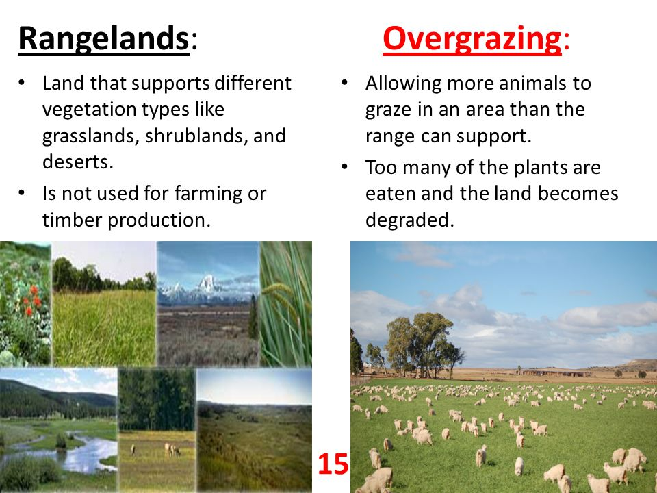 Rangelands: Overgrazing: