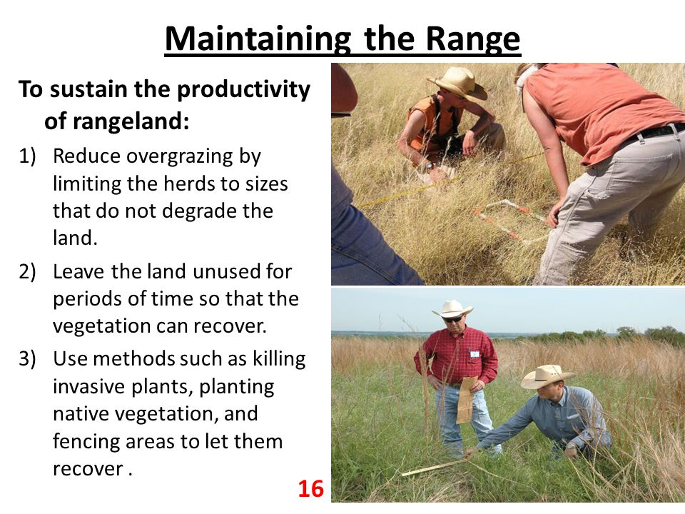 Maintaining the Range To sustain the productivity of rangeland: