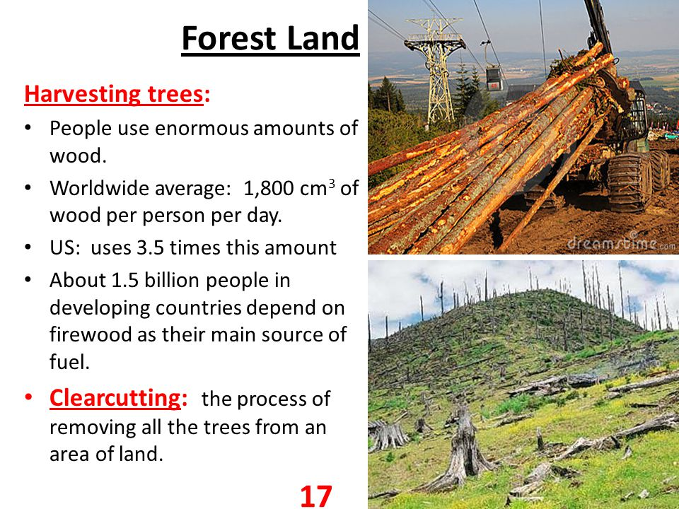 Forest Land Harvesting trees: