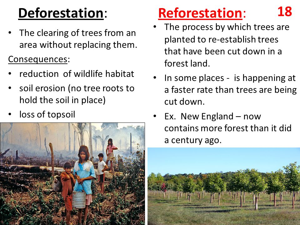 Deforestation: Reforestation: