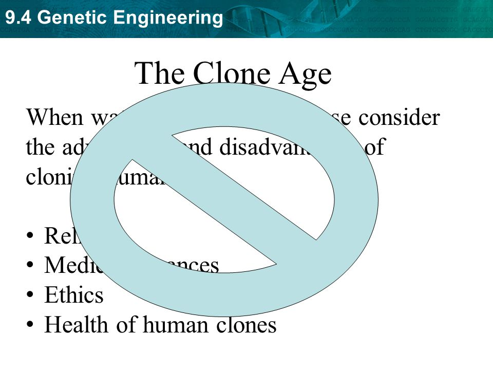 cloning and genetic engineering essay The idea of cloning human beings through technological means has been a popular topic of science-fiction novels and movies throughout the decades the benefits and implications of man creating man have long fascinated, and stupefied, humanity.