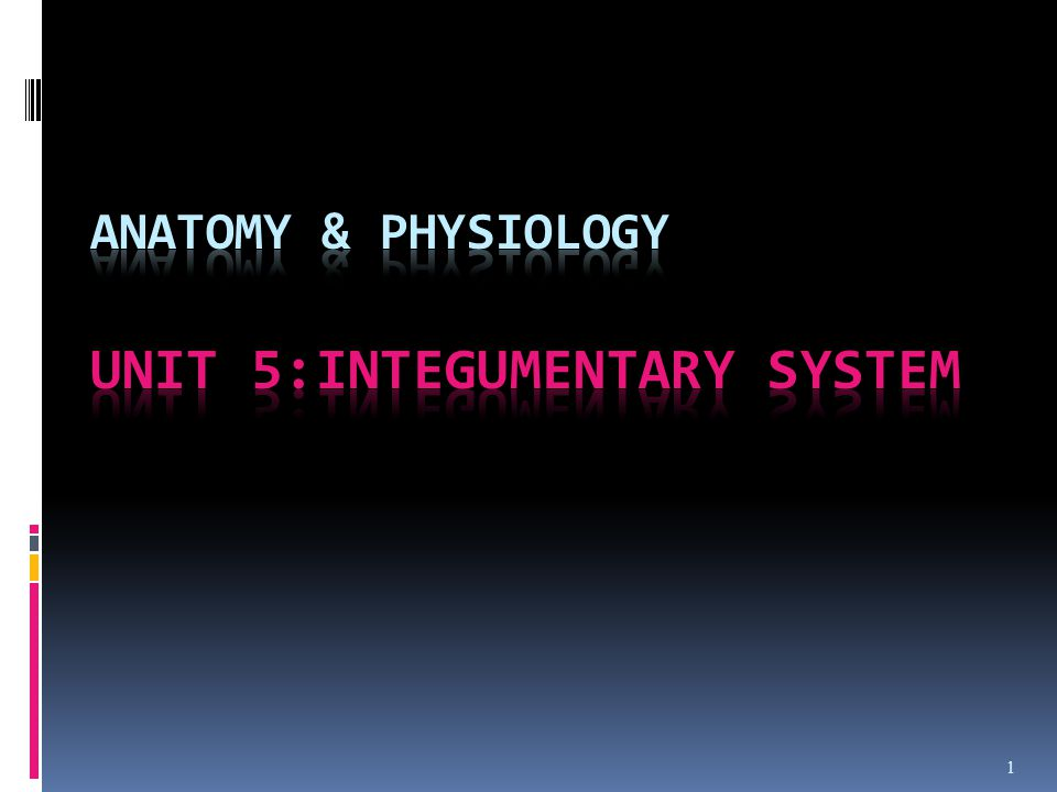 Anatomy & Physiology Unit 5:Integumentary System - ppt video online ...