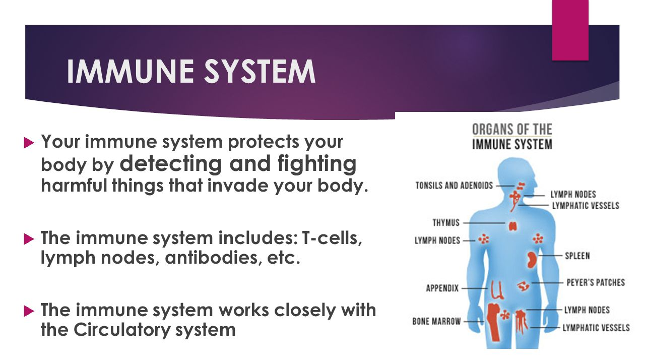 IMMUNE SYSTEM Your immune system protects your body by detecting and fighting harmful things that invade your body.