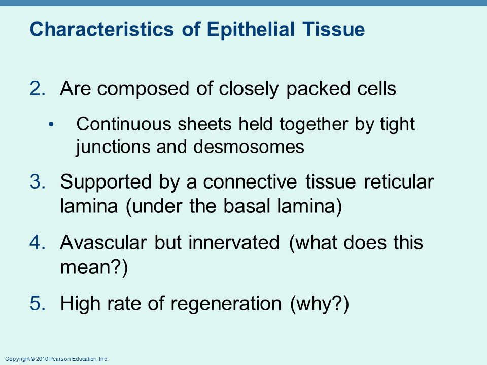 characteristics of epithelial tissue Human cheek epithelial cells the tissue that lines the inside of the mouth is known as the basal mucosa and is composed of squamous epithelial cells these.