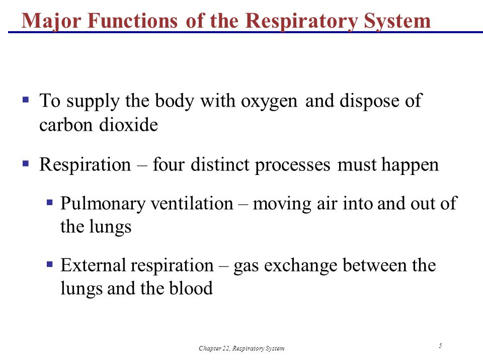 Parts of the Respiratory System and Functions