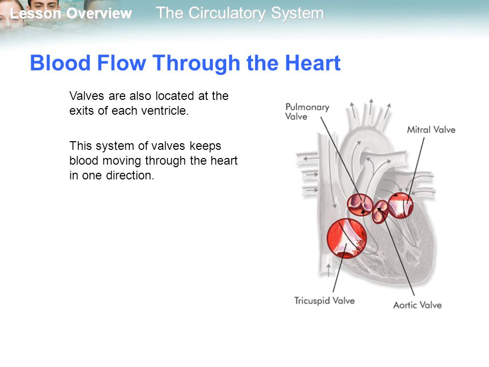 33 1 the circulatory system ppt download. Black Bedroom Furniture Sets. Home Design Ideas