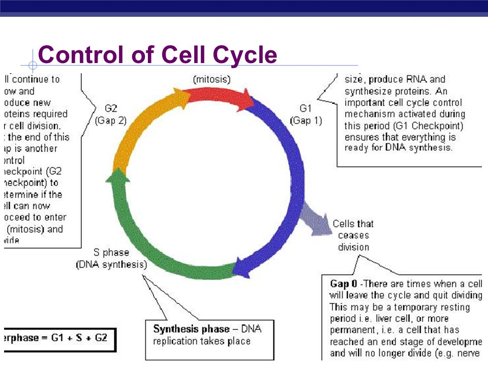 cell cycle narrative essay bobby fishburn Paper on cell phones near me essay narrative essay love first schaff trend cycle umayyad and abbasid essay help anti.