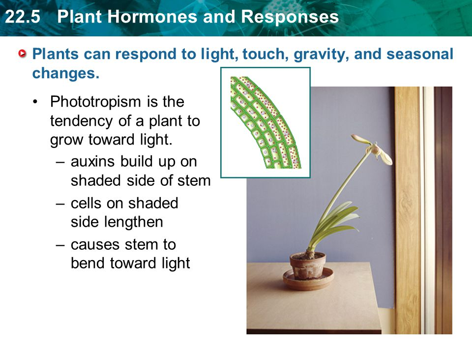 Plants can respond to light, touch, gravity, and seasonal changes.