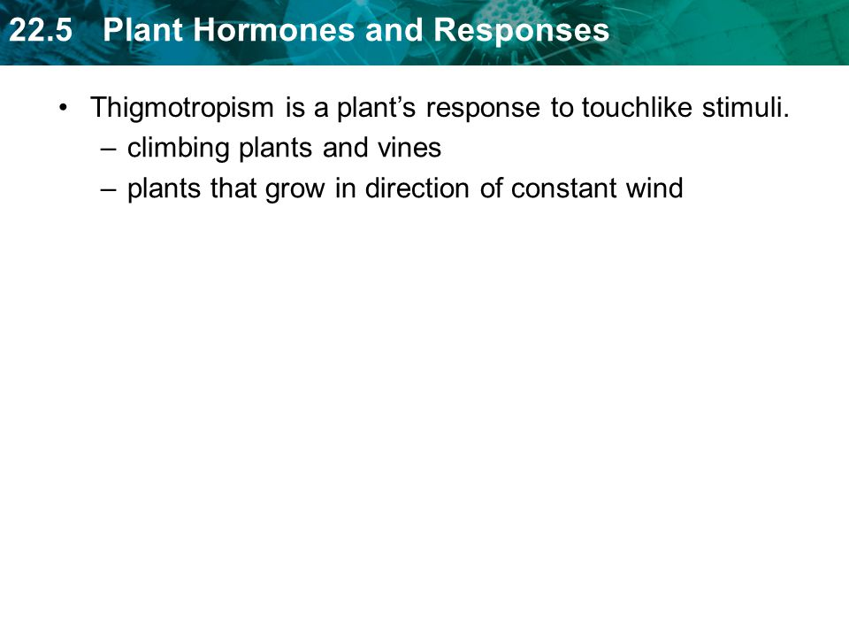 Thigmotropism is a plant's response to touchlike stimuli.