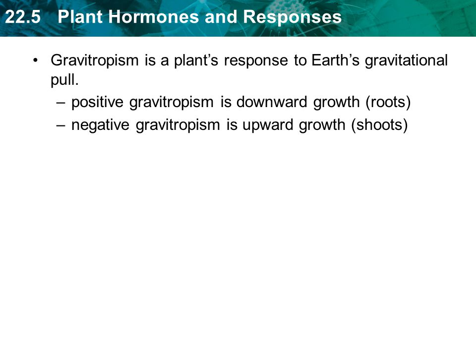 Gravitropism is a plant's response to Earth's gravitational pull.