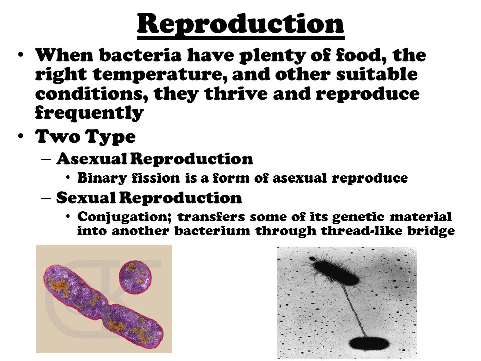 Bacteria. - ppt download