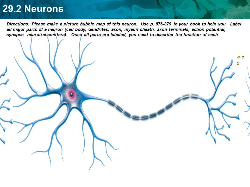 neuron and synapse functions pdf