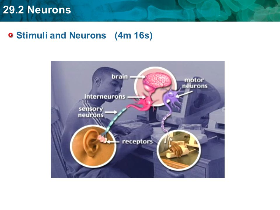 Stimuli and Neurons (4m 16s)