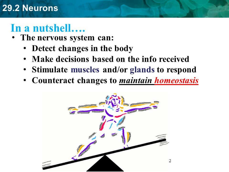 In a nutshell…. The nervous system can: Detect changes in the body