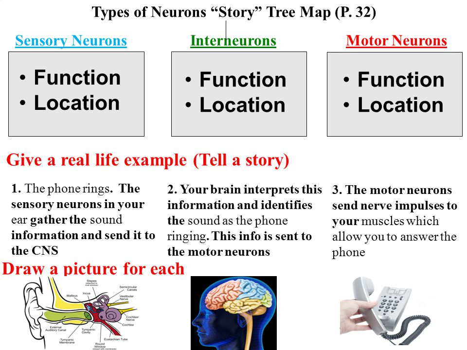 Types of Neurons Story Tree Map (P. 32)