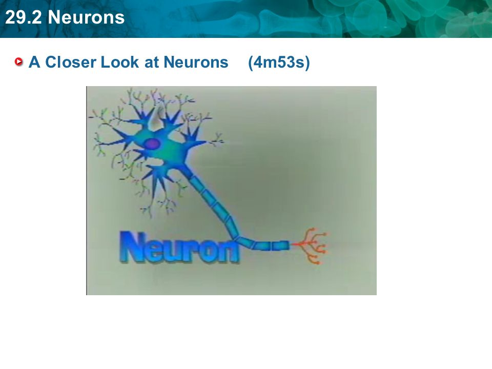 A Closer Look at Neurons (4m53s)