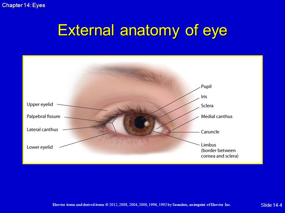 External Eye Anatomy 4469419 Follow4morefo