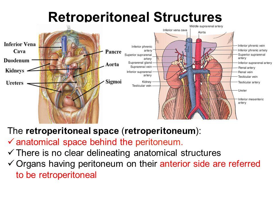 Clinically Oriented Anatomy of Retroperitoneum, Kidneys ...