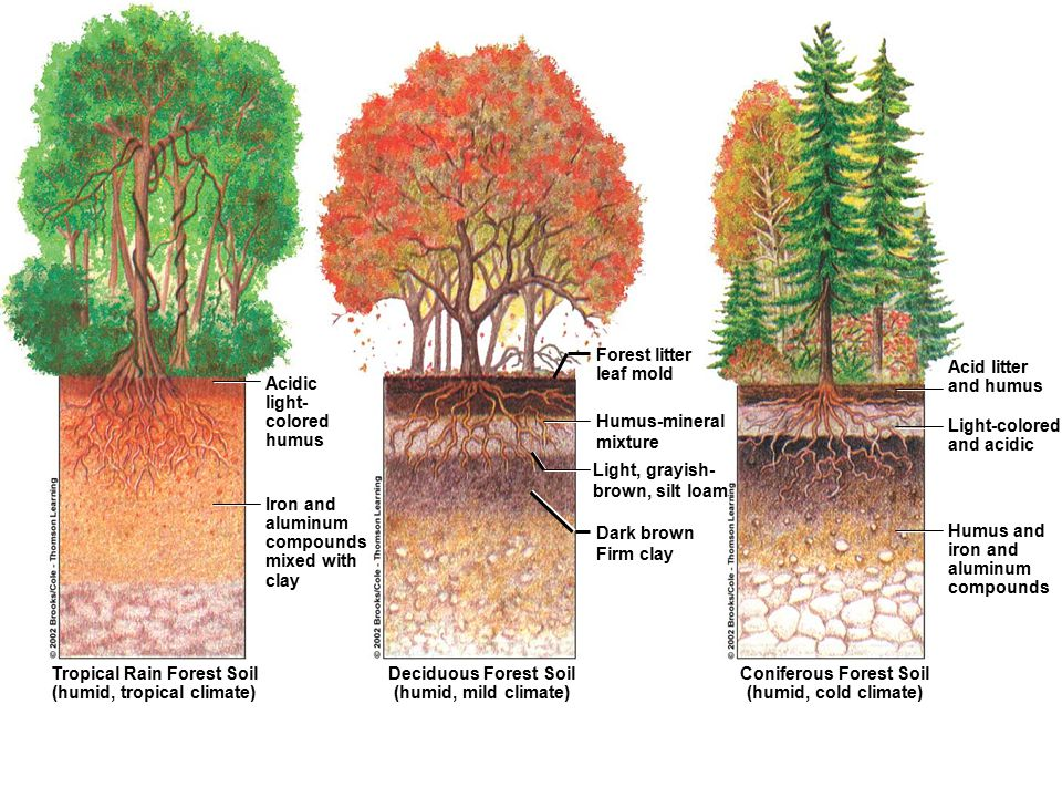 Soils and their processes ppt video online download for Soil 4 climate