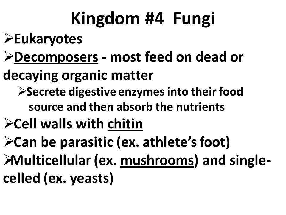 Fungi That Absorb Food From Decaying Organic Matter Are