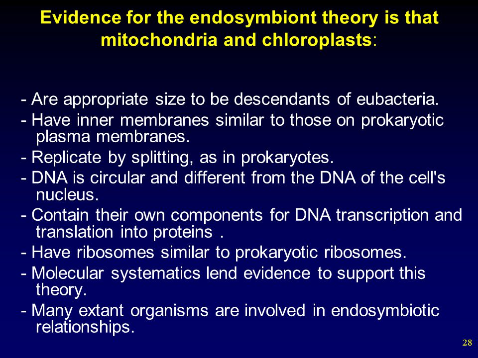 the evidence for the endosymbiotic theory The endosymbiotic theory is the accepted mechanism for how eukaryotic cells evolved from prokaryotic cells first published by lynn margulis in the late 1960s, the endosymbiont theory proposed that the main organelles of the eukaryotic cell were actually primitive prokaryotic cells that had been engulfed by a different, bigger prokaryotic cell .