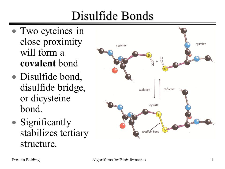 Disulfide Bonds Two cyteines in close proximity will form a covalent bond Disulfide bond ...