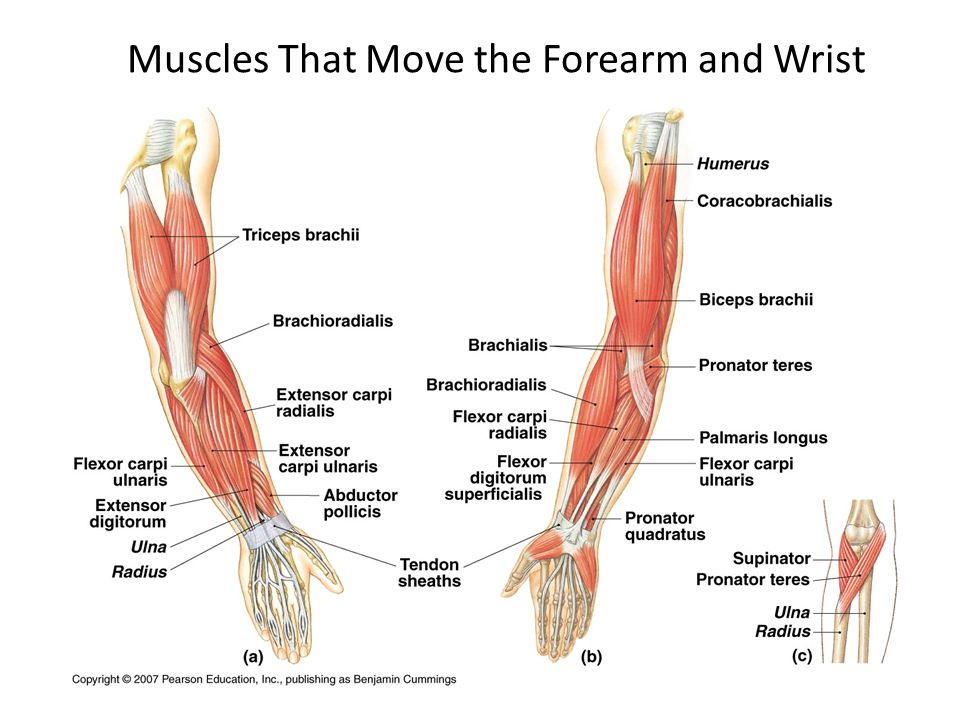 how to get wrist muscle