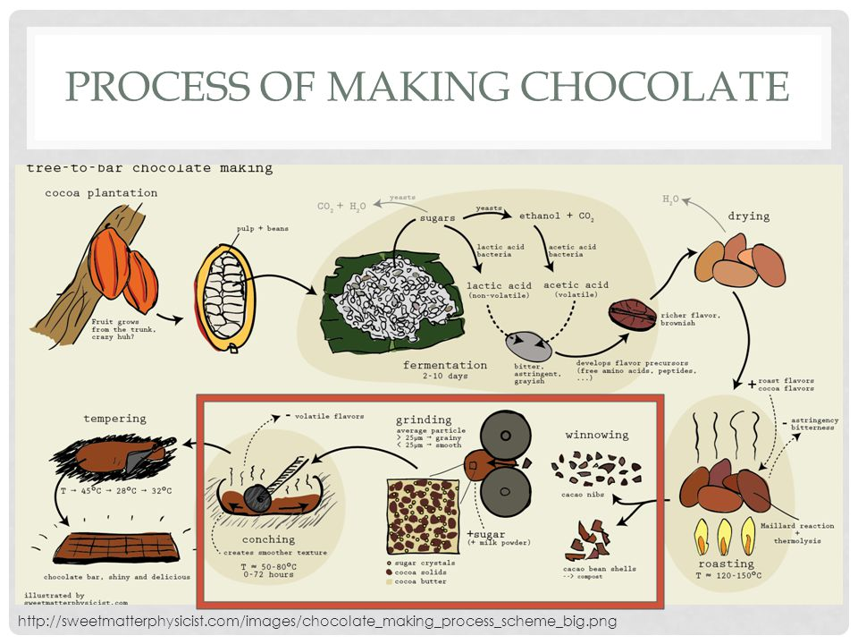 The process of making chocolate essay