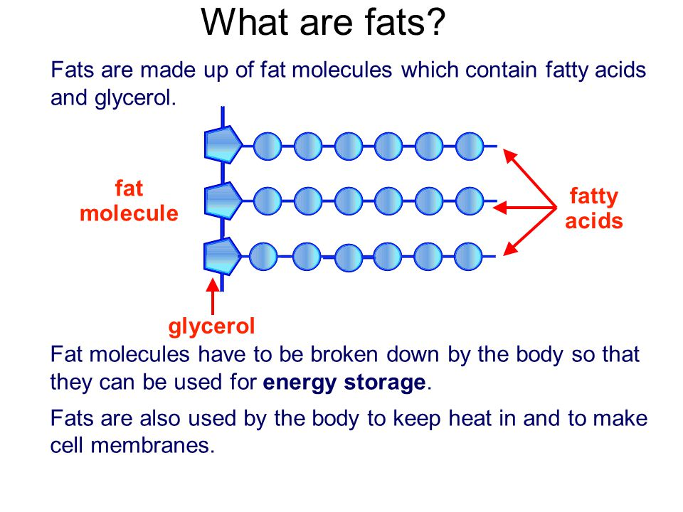 What Is Fat Made Of 41