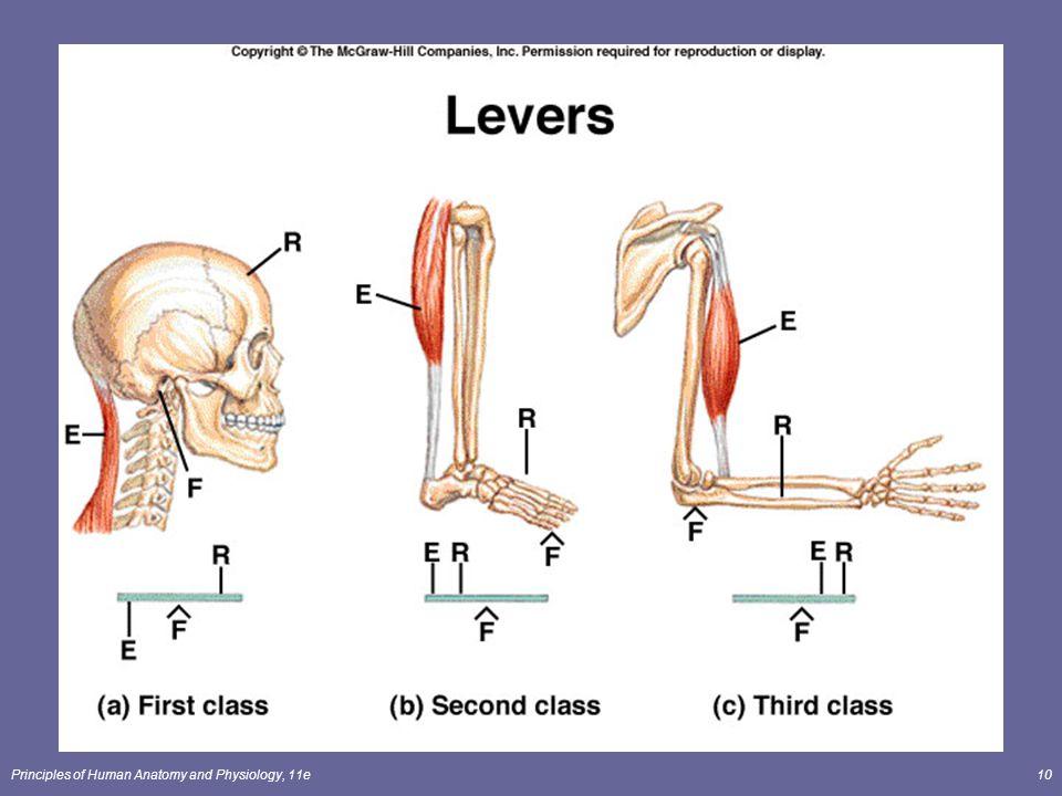 Ziemlich Human Anatomy And Physiology Class Fotos - Menschliche ...