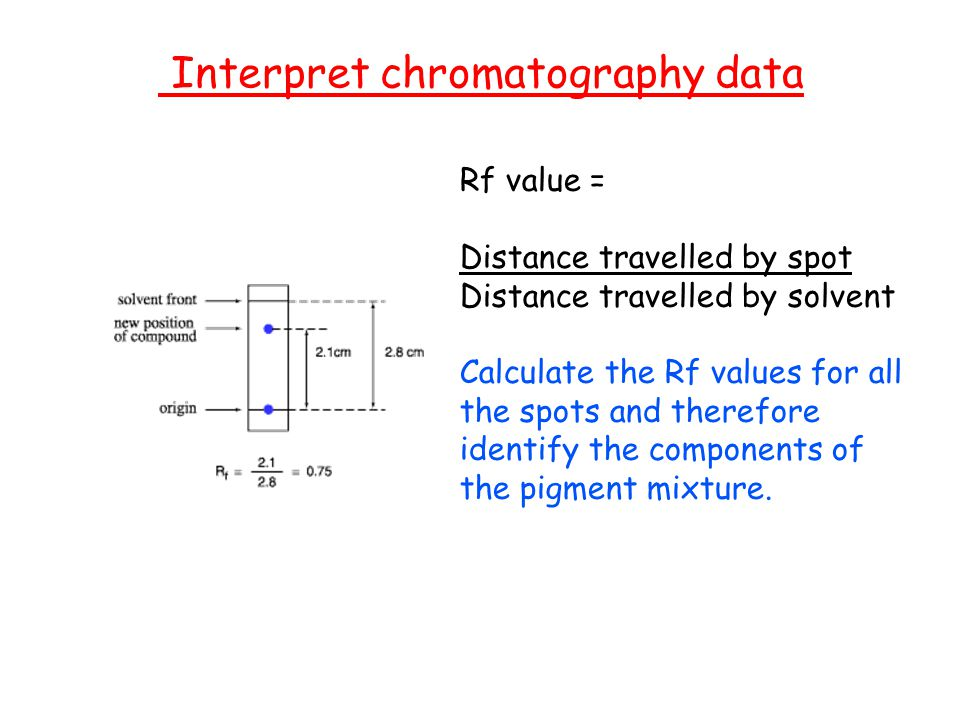 photosynthesis spinach rf value Photosynthesis photosynthesis  using the spectrophotometer tube 1 spinach  for the solvent = high rf value affinity for the paper = low rf value.