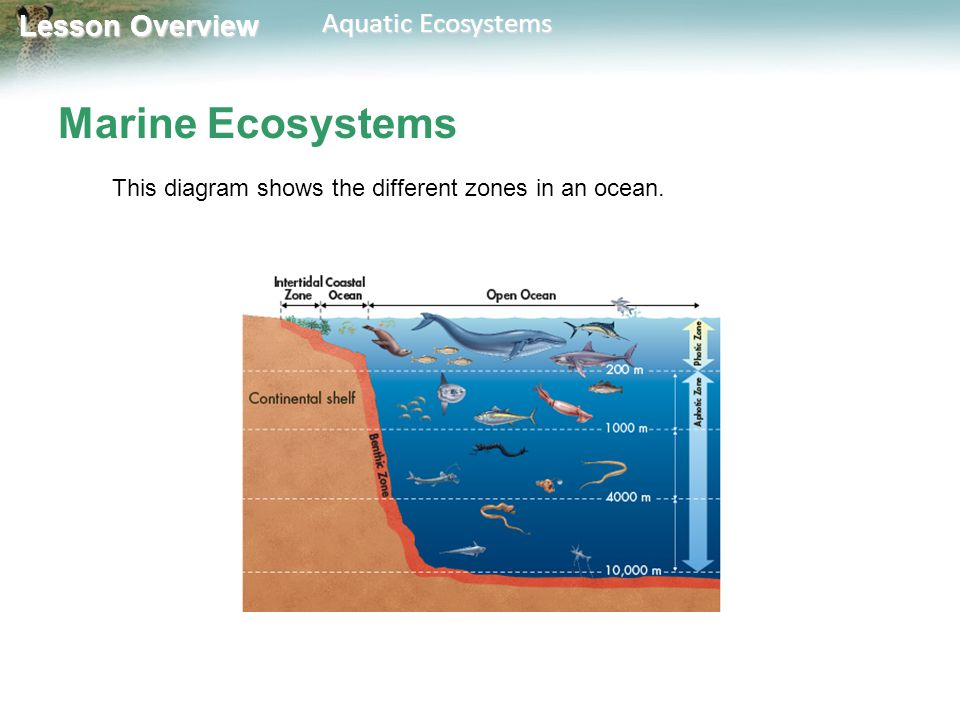 lesson overview 4.5 aquatic ecosystems. - ppt video online ... chevy 350 marine wiring diagram marine ecosystem diagram