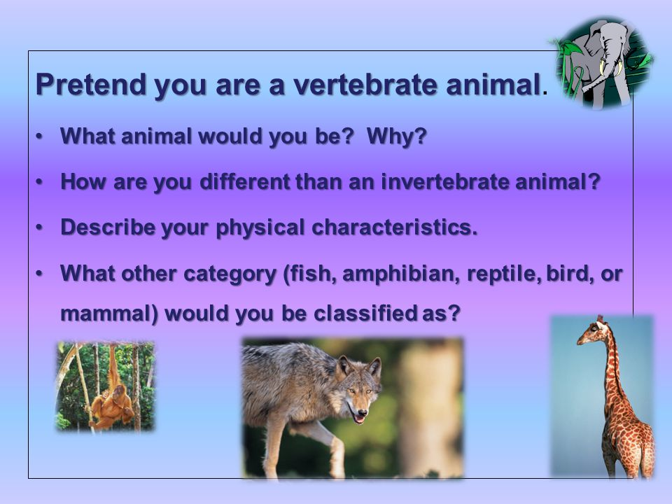 classifying animals objective  swbat  classify animals