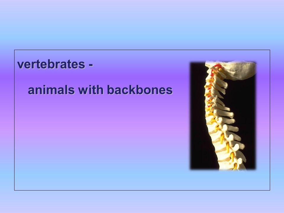 Classifying Animals Ob...