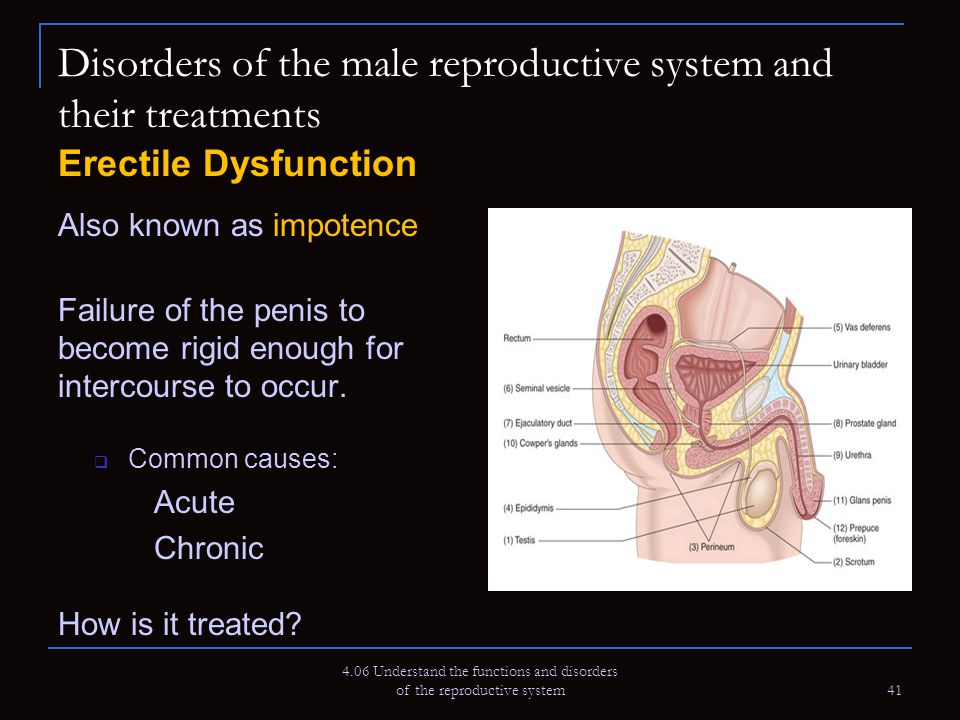male and female reproductive disorder balanoposthitis Male and female sexual dysfunction with ssris although changes in sexual desire, sexual performance and sexual satisfaction often occur as manifestations of a psychiatric disorder, they may also be a consequence of pharmacologic treatment.