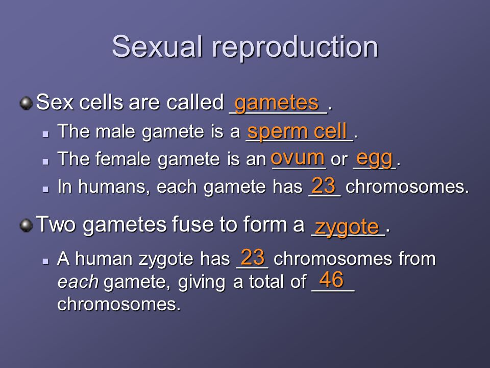 Human Reproduction and Development - ppt video online download