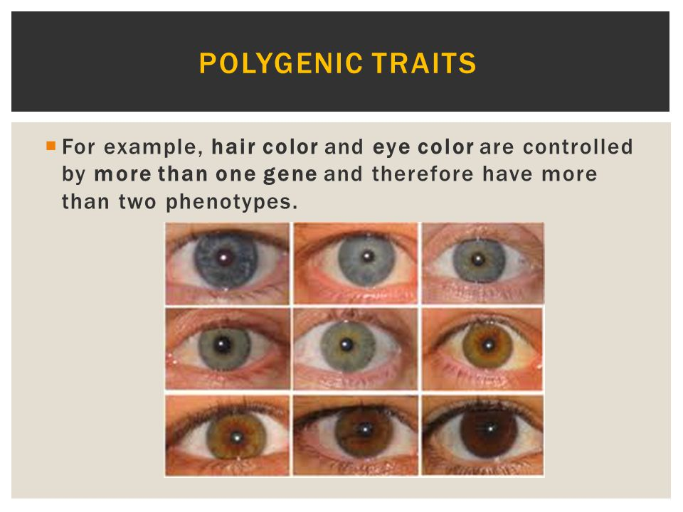 Polygenic traits For example, hair color and eye color are controlled by more than one gene and therefore have more than two phenotypes.