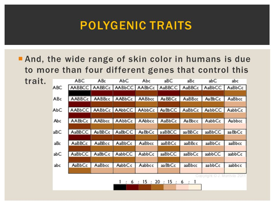 Polygenic traits And, the wide range of skin color in humans is due to more than four different genes that control this trait.