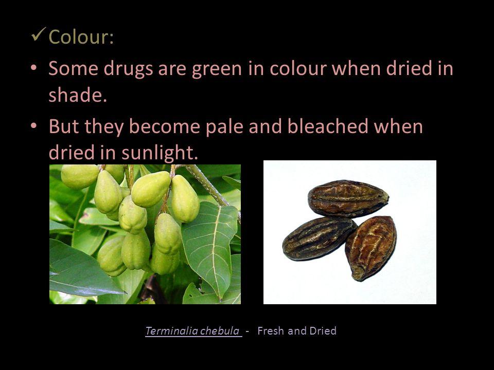Terminalia chebula - Fresh and Dried