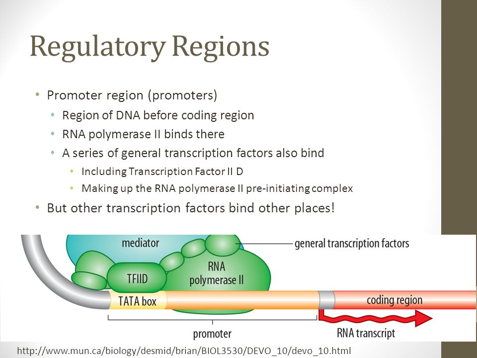 how to find promoter region of a gene