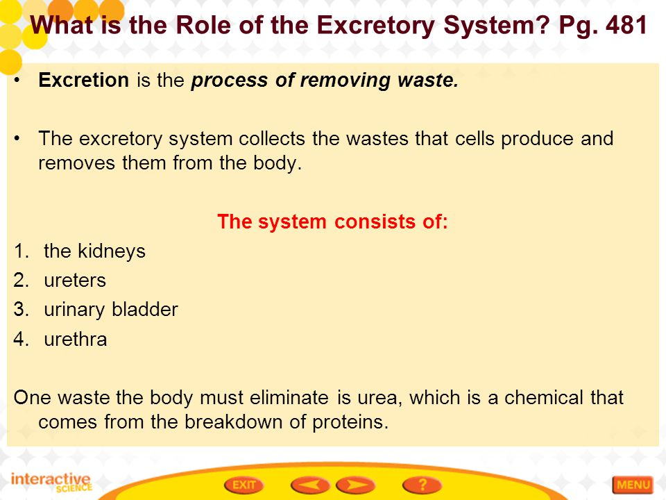 What is the Role of the Excretory System Pg. 481