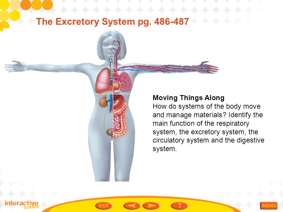 The Excretory System pg