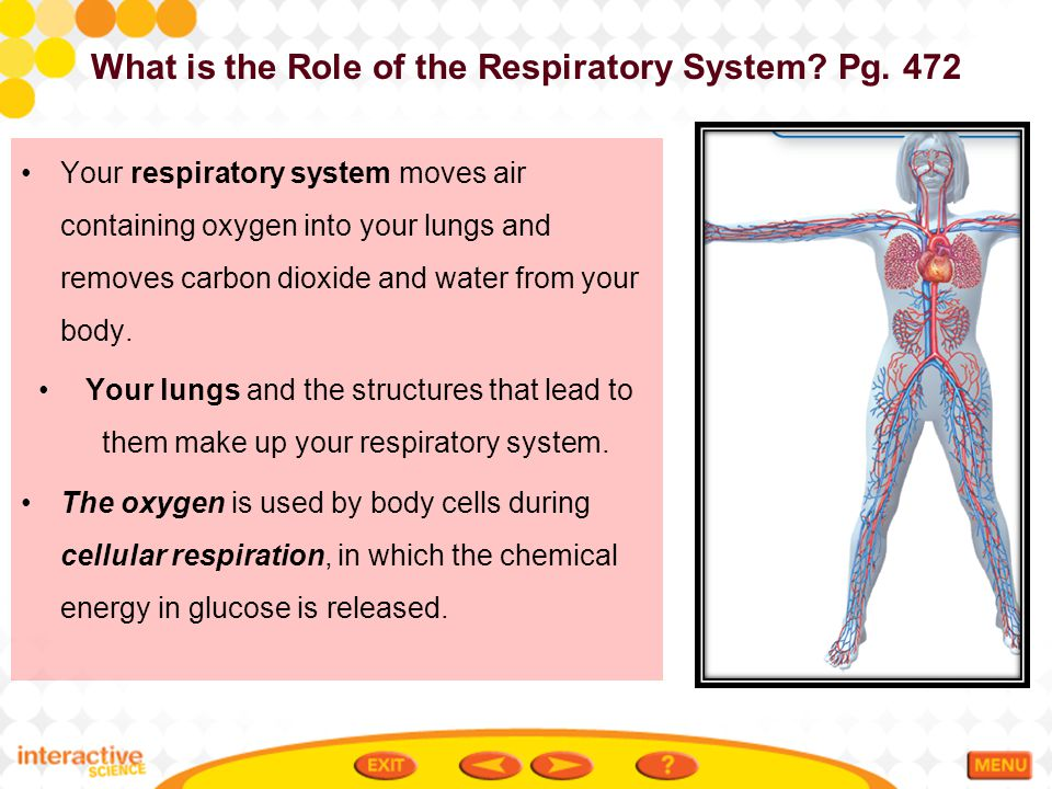 What is the Role of the Respiratory System Pg. 472