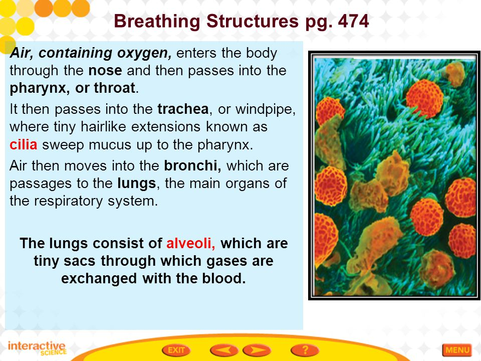 Breathing Structures pg. 474