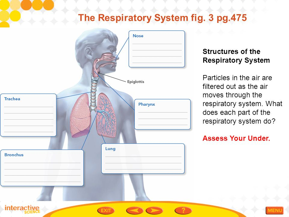 The Respiratory System fig. 3 pg.475